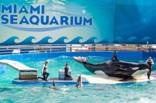 iami Seaquarium